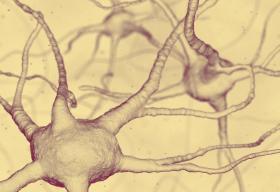 Als orígens de la ment humana