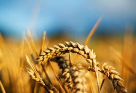 Alimentar el món. Seguretat i sostenibilitat en la producció global d'aliments