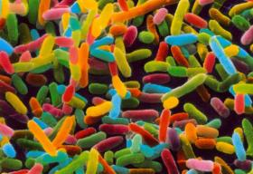 The Human Microbiome. Present Status and Future Prospects